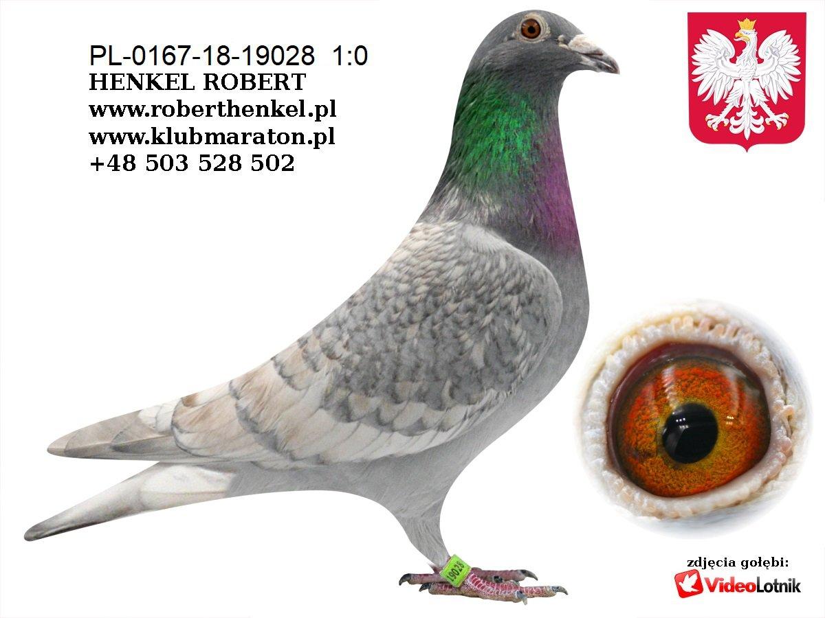 Zdjęcia gołębi cz.1 - grudzień 2020