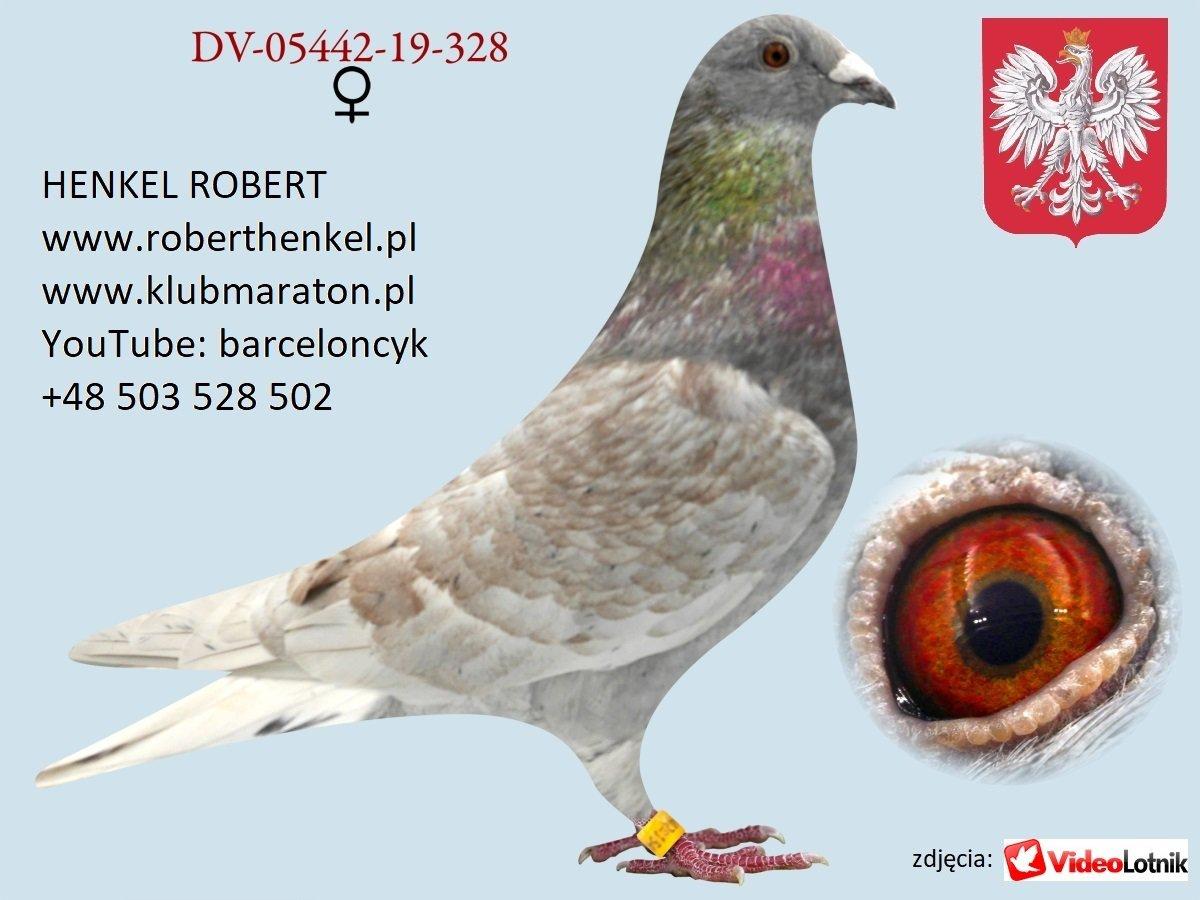 Zdjęcia gołębi cz.3 - grudzień 2020