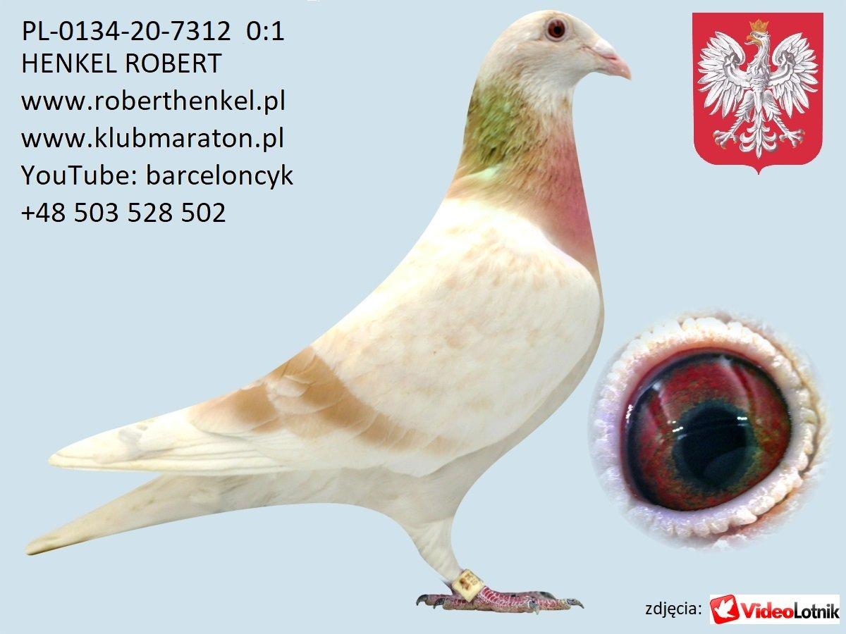 Zdjęcia gołębi cz.2 - grudzień 2020